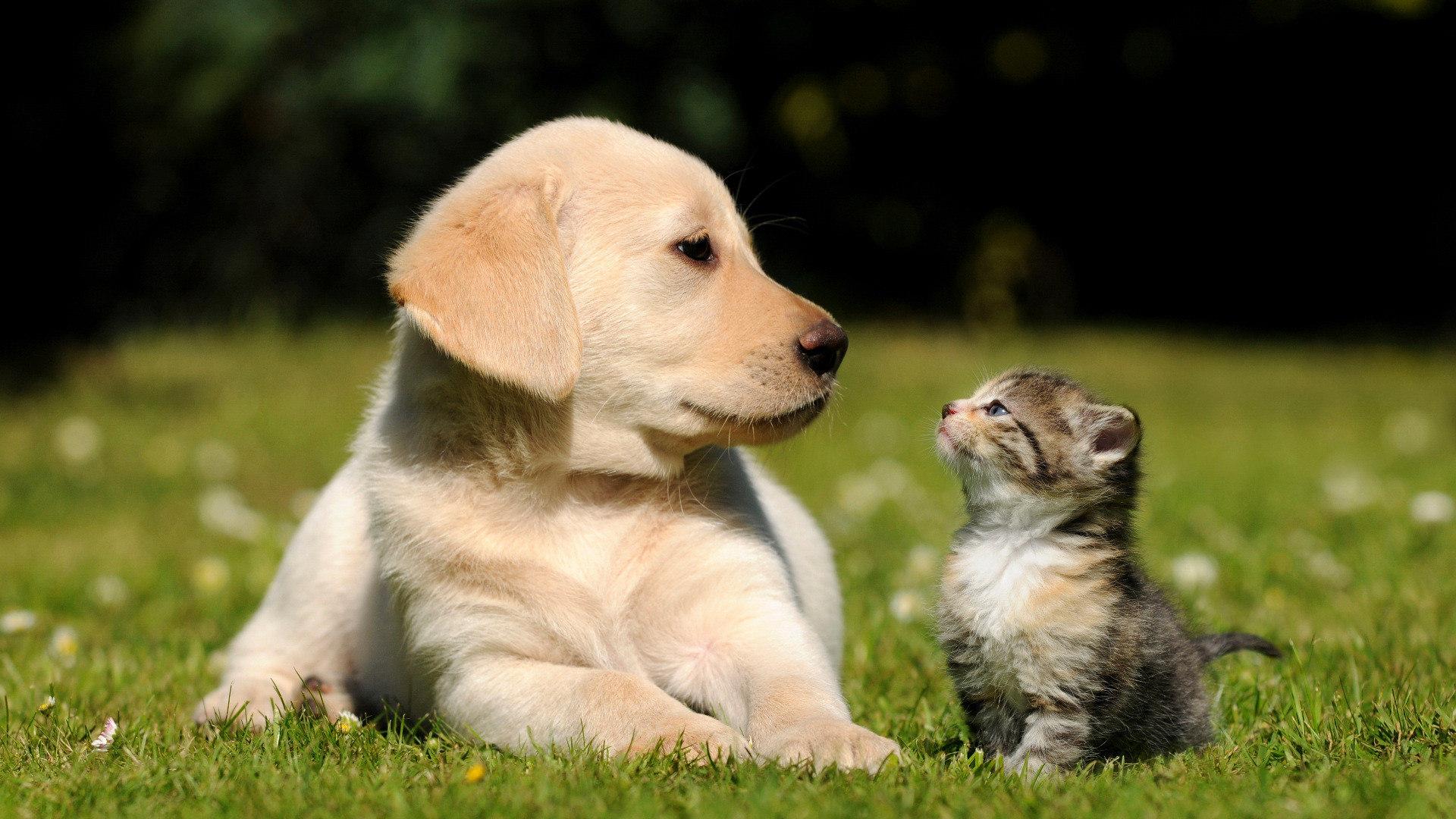padova-veterinaria-farmacia