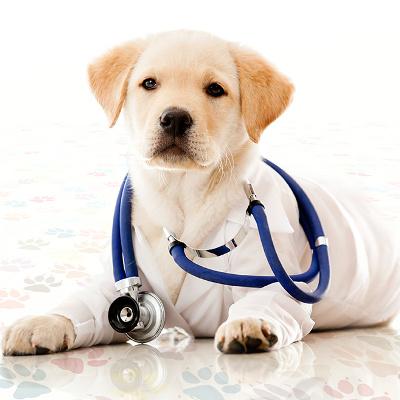 padova-veterinaria-prodotti