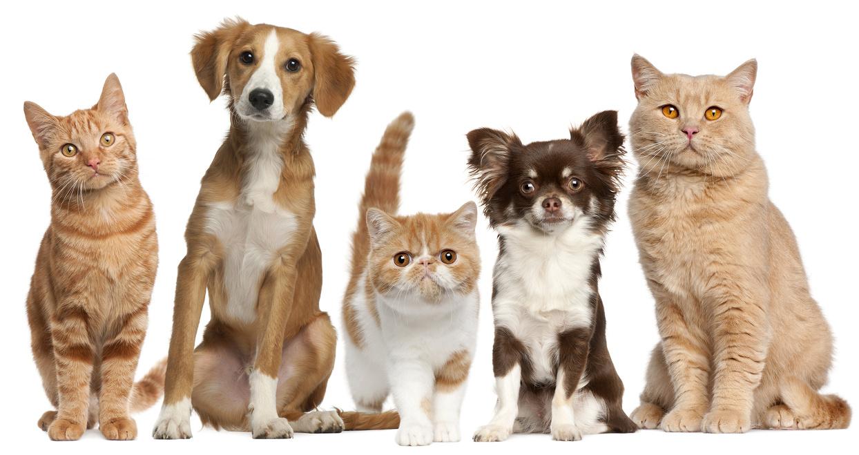 padova-farmacia-veterinaria